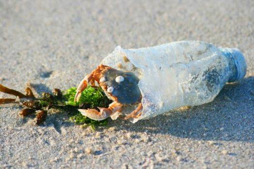 Clean Beach Actie